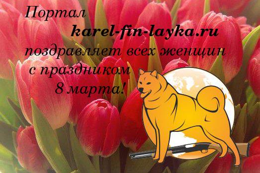карело-финская лайка 8 марта
