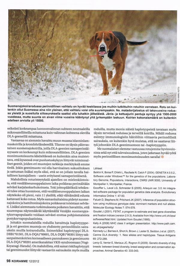 карело-финская лайка финский шпиц