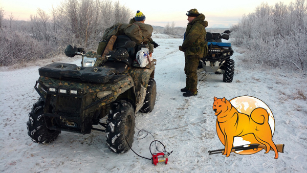 карело-финская лайка чемпионат