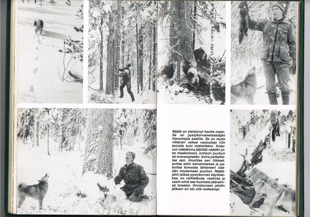 карело-финская лайка впрошлом