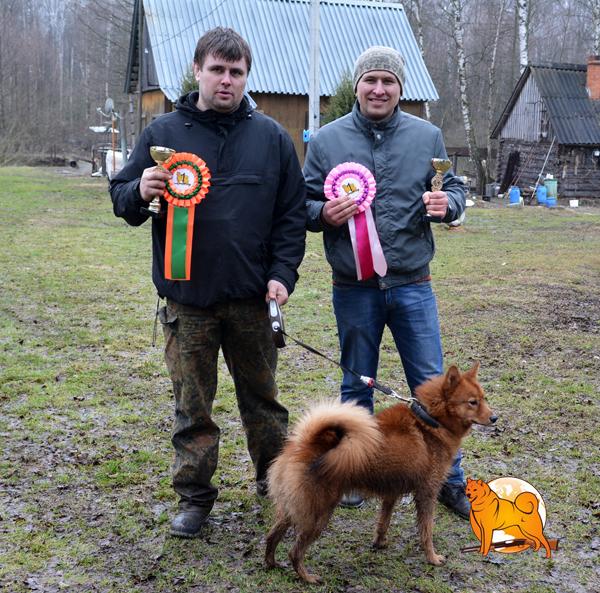 карело-финская лайка состязания