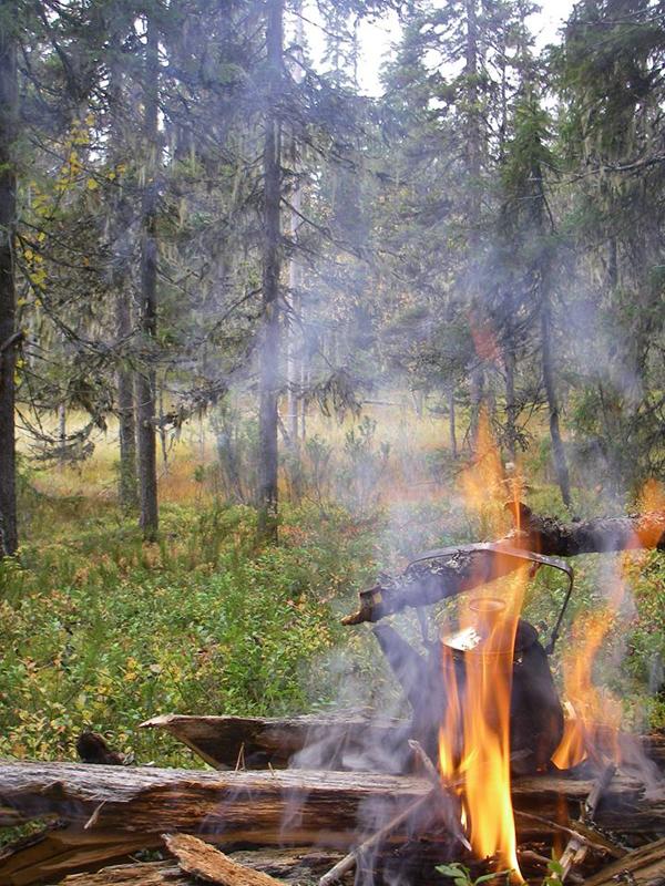 карело-финская лайка охота
