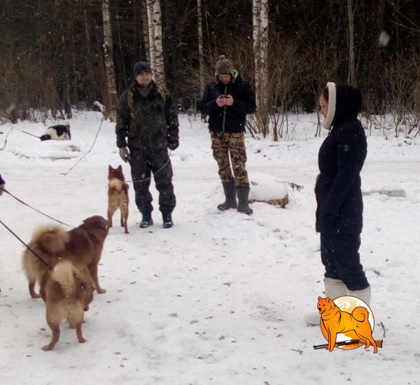 карело-финские лайки испытания