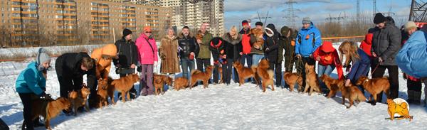 выставка карело-финские лайки