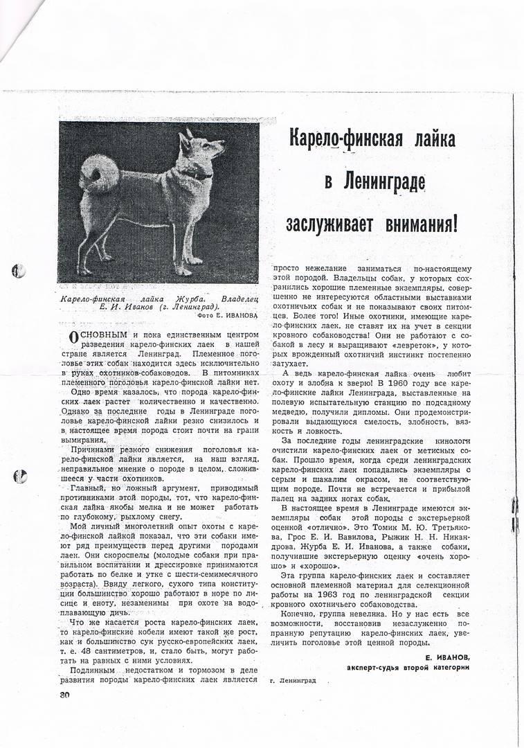 статья о карело-финской лайке