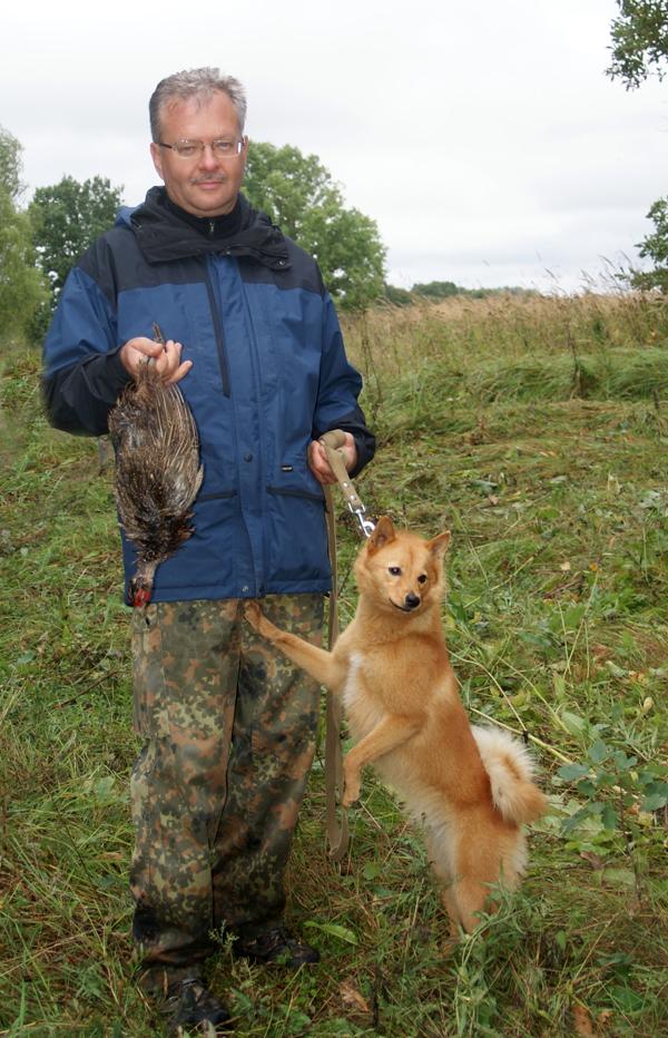 карело-финская лайка фазан
