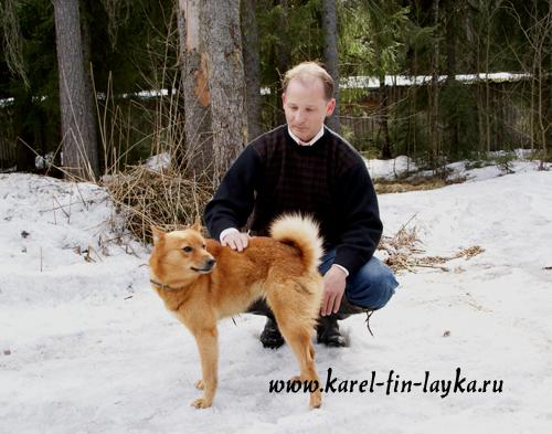карело-финская лайка питомник финский шпиц
