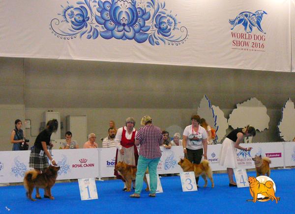 карело-финская лайка шоу