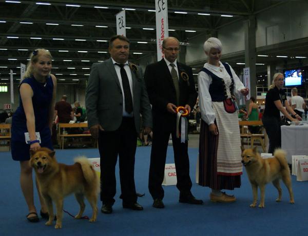 карело-финская лайка чемпионат мира